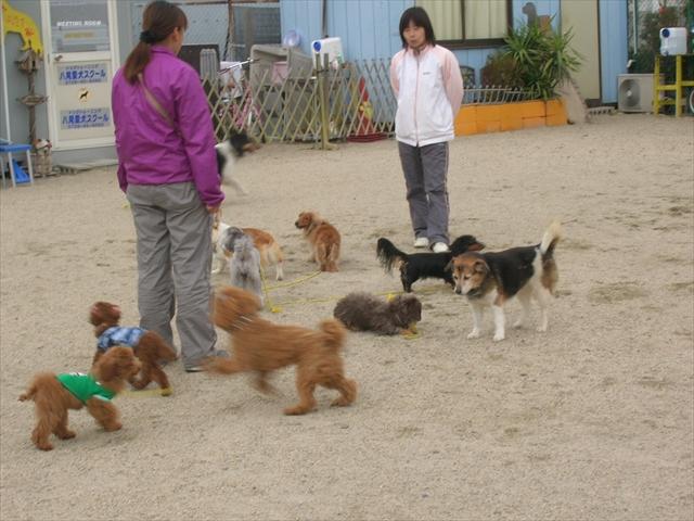 保護犬応援